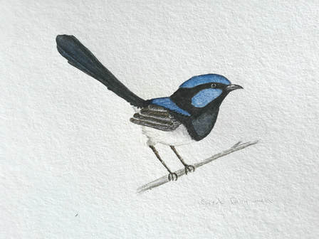Fairy wren, Margeaux Davis, 2018. www.willowynn.com